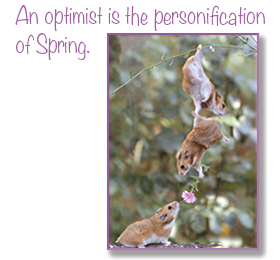 An Optimist is the personification of spring